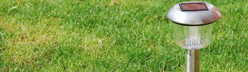 lampje in het gras